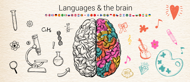 [تصویر:  brain-and-languages.png]